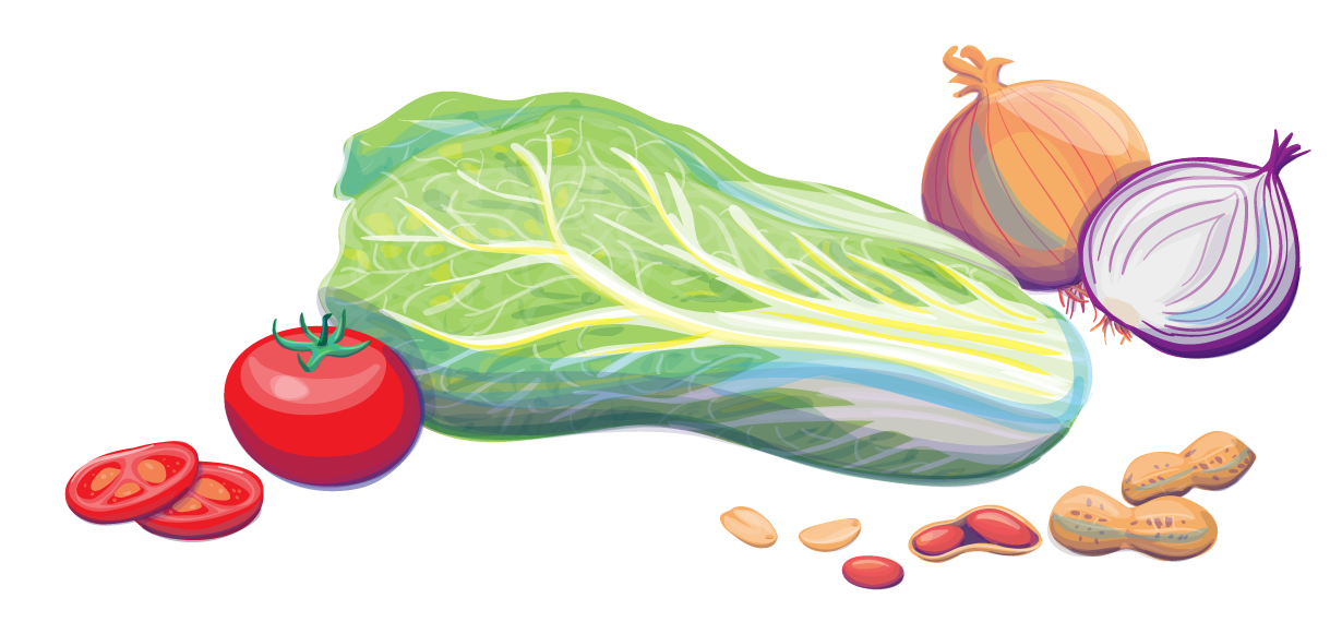 vegetable illustration